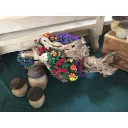 Fungo in legno